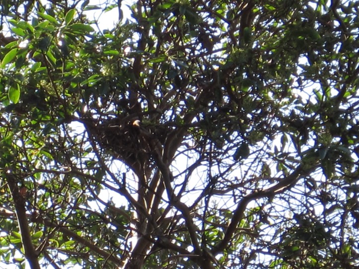 I can hear the baby in this nest but can't see him/her