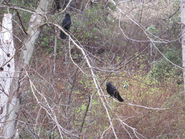 Pair in tree at the beach