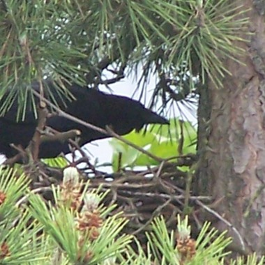 See the edge of the stick nest made strong to hold babies.
