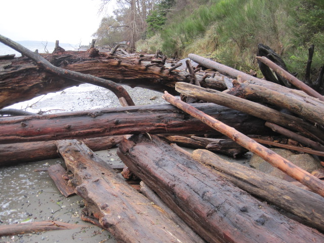 High Tide Fort gathered more driftwood
