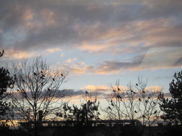 RentonCrows at sunset