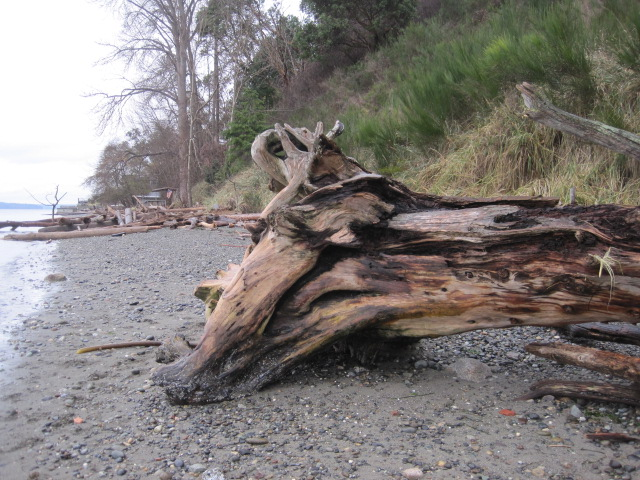 Big Log rolled over by High Tide - not a fort any more
