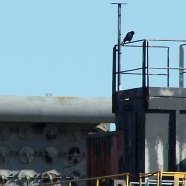 Crow on barge with cool dials watching over his domain