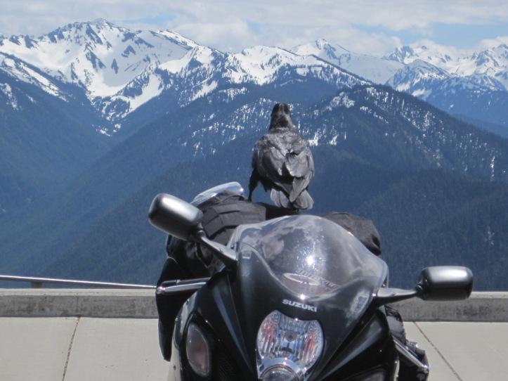 Raven enjoying view