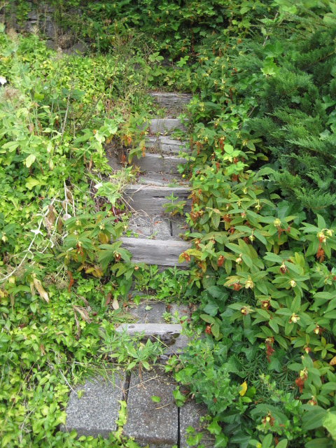 Stairs to the garden