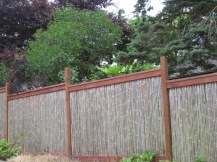 Bamboo Fence - with surprise behind it
