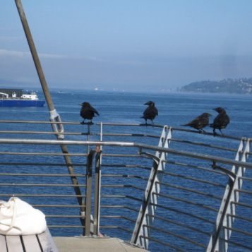 Crows at Jack Block Park