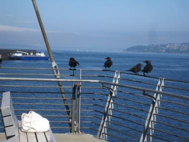 Crows at Jack Block Park