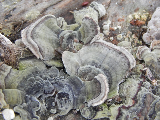 Fungus Art at beach
