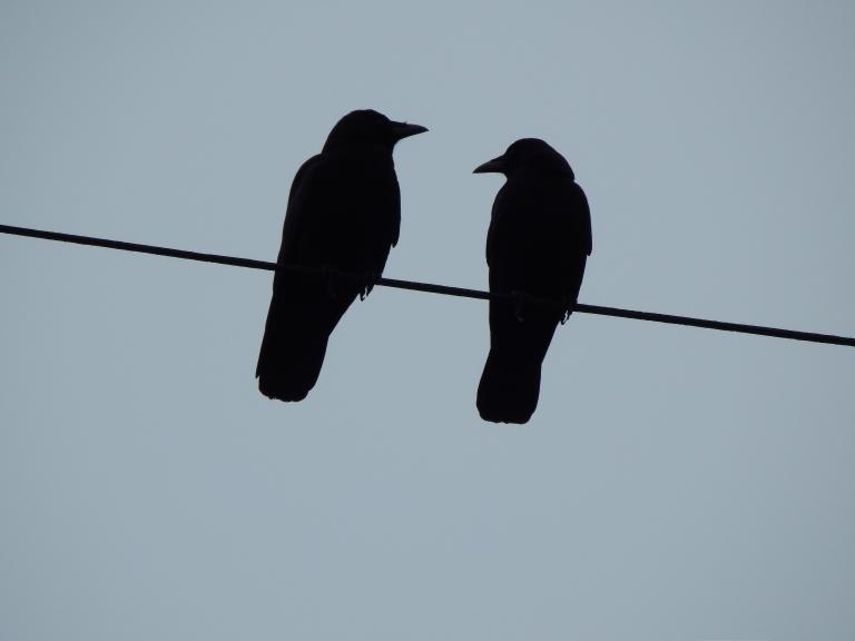 Crow Partners
