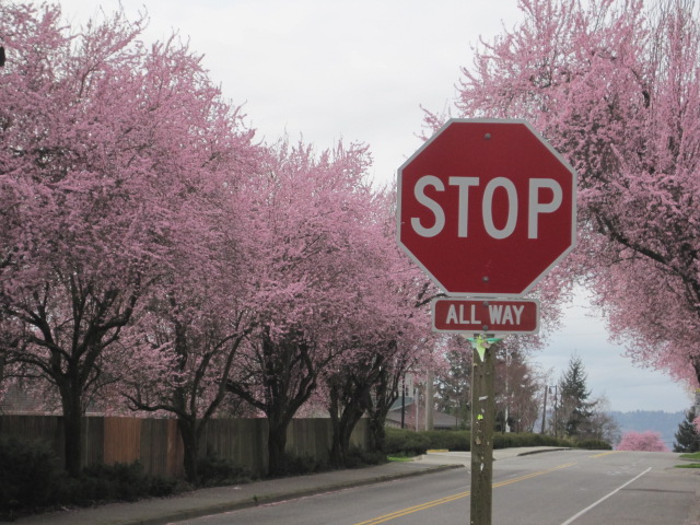 Stop for Spring Pink