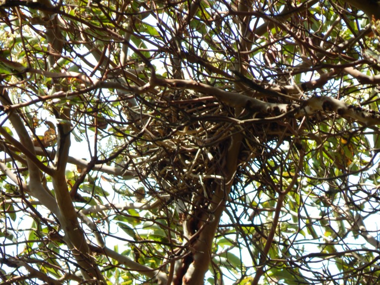 Nest 1 in Madronas