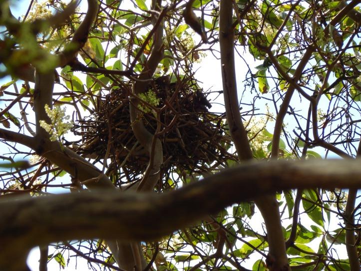 Treetop Nest 2
