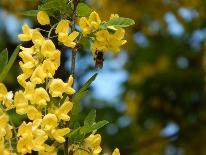 Fun of the Dangling Bee