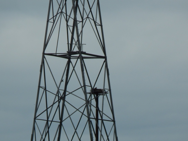Powerline Tower with Osprey Nest