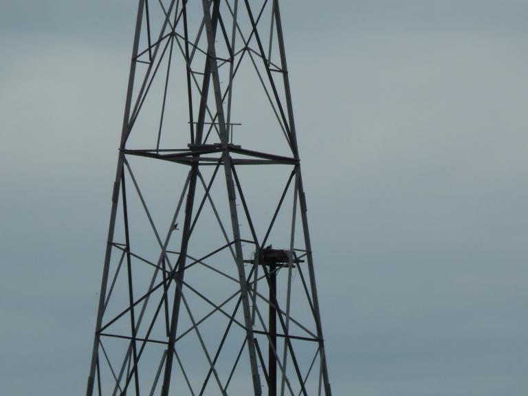 Powerline Tower with Osprey Nest