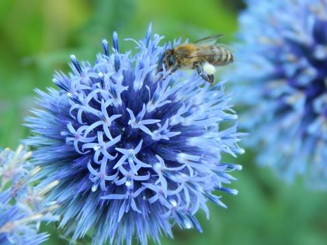 Fully loaded Mr Bee