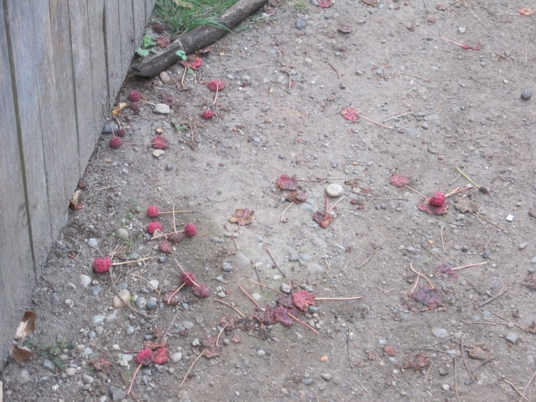 Smashed fruit caught my attention