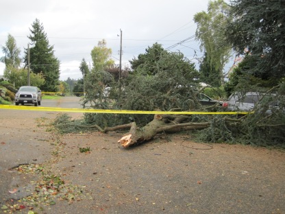 Street cautioned taped off due to big tree blowing down