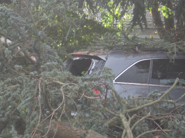 Wind, trees and cars don't mix