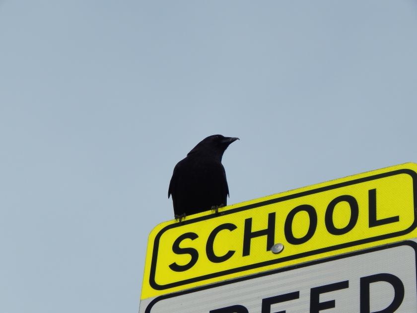 Roxhill Crooked Beak Crow returns perhaps