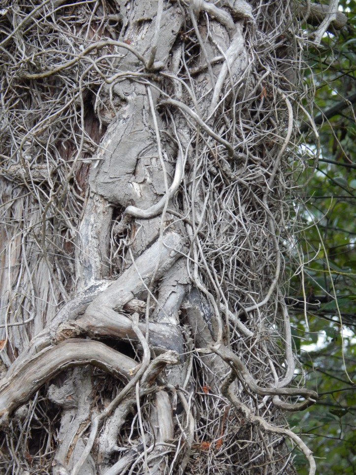 Shaggy protector of tree