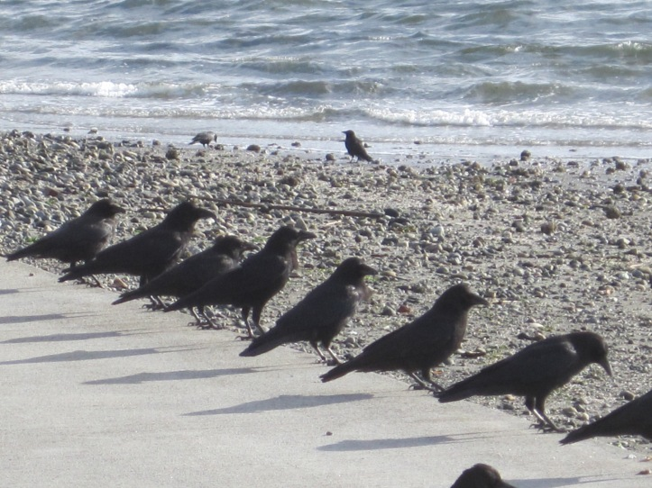 Seola Beach bulkhead watchers.