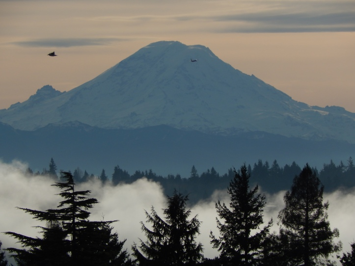 Mt Rainier in the mist with a crow fly by
