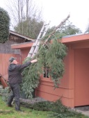 Removing the wind blown branch