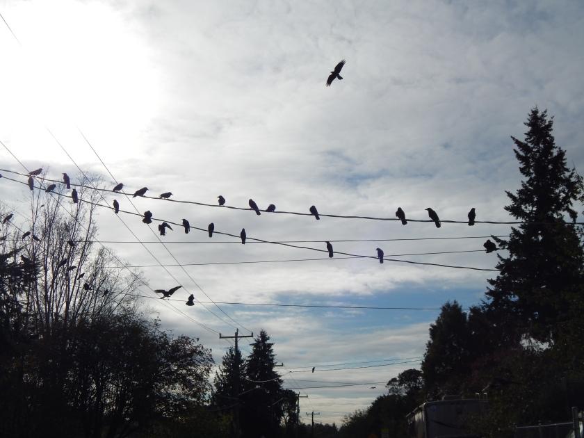 30th Avenue flock watching me
