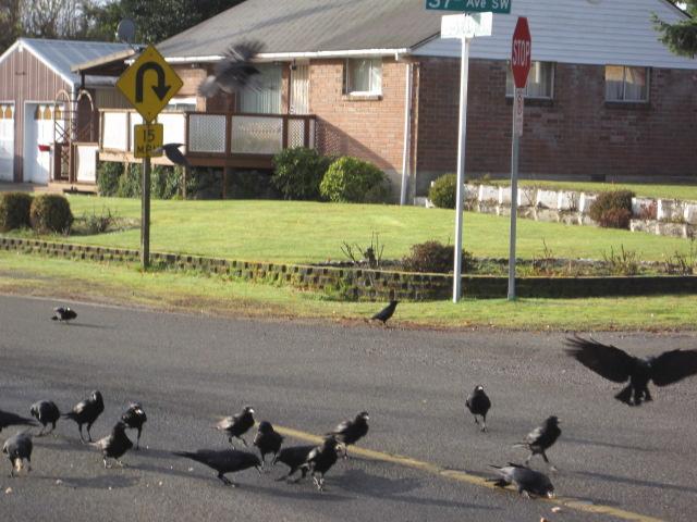 Big flock at MVD & 35th hairpin