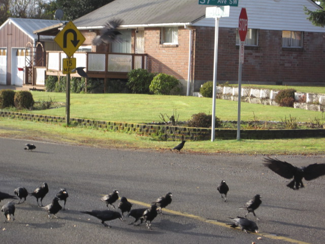 Big flock at MVD & 35th hairpin