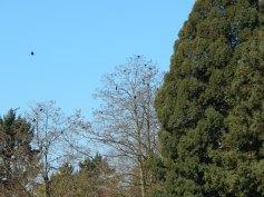 Volunteer Park Crows egging on friends