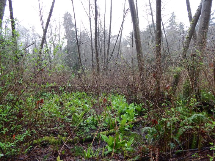 Forest is bright with sprouting greens