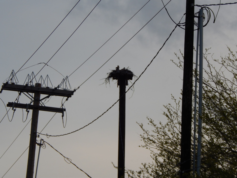The power pole on the left was the original spot for this Osprey Nest