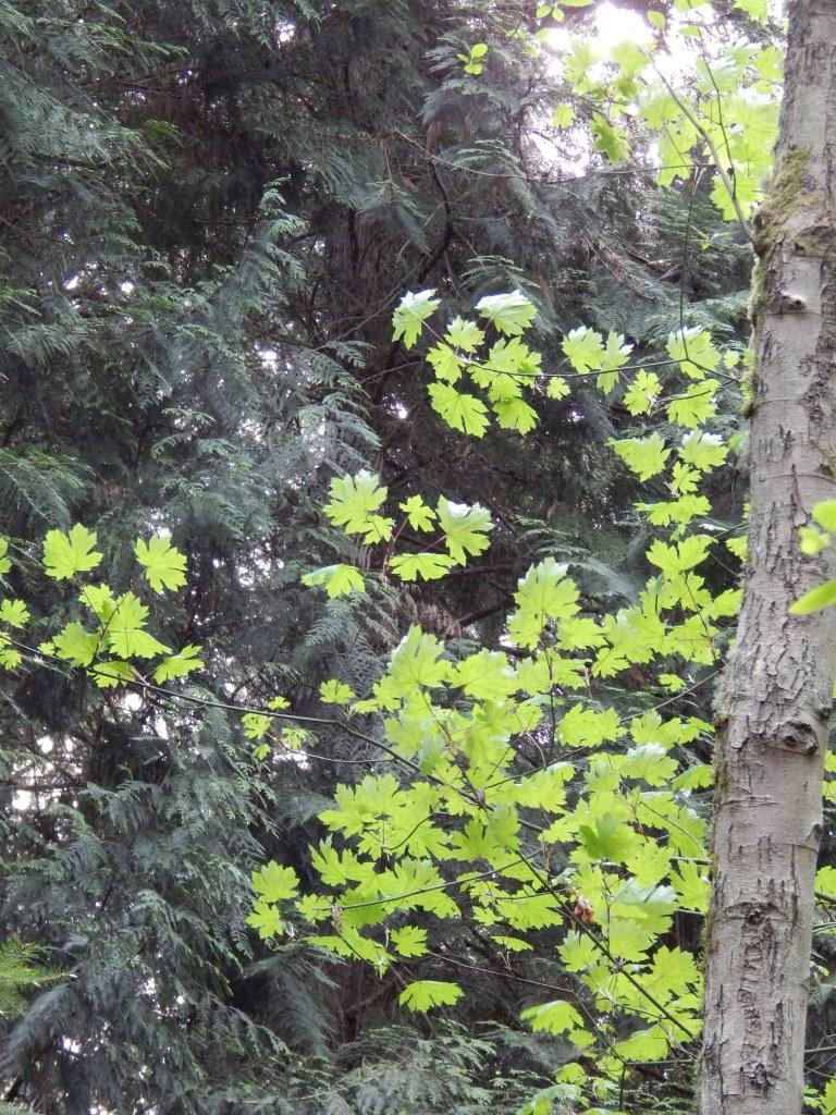 Spring Green vivid on darker cedar green