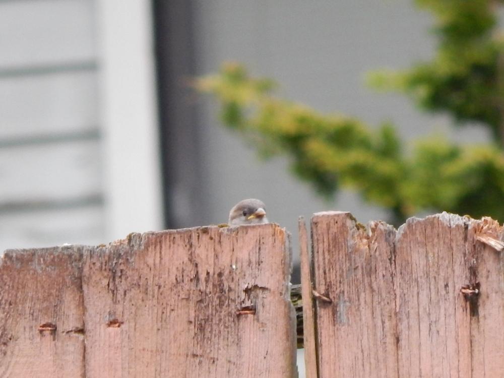 Baby peeking at me