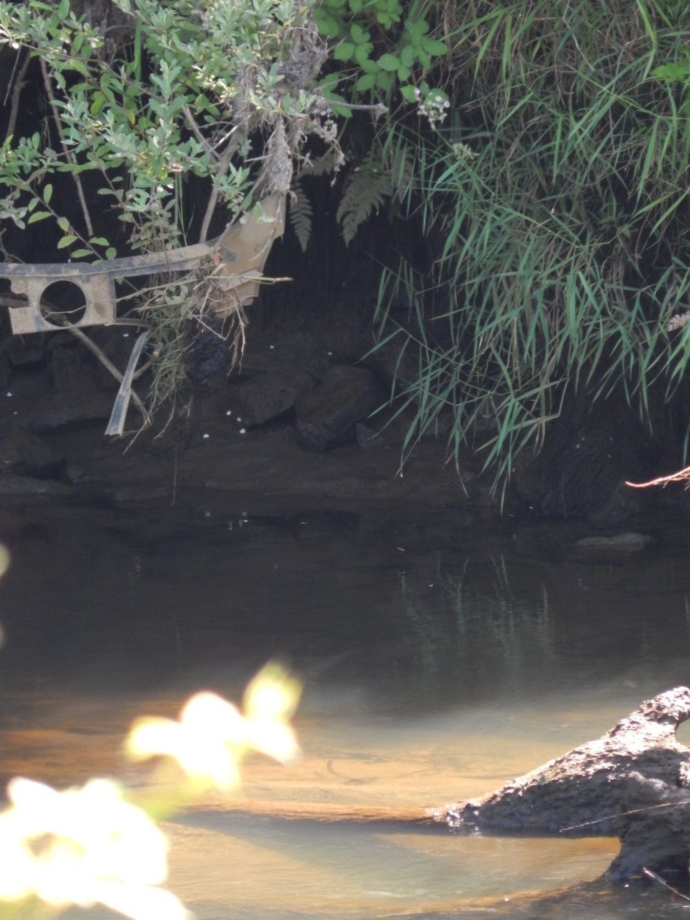 Car Part survives on Green River