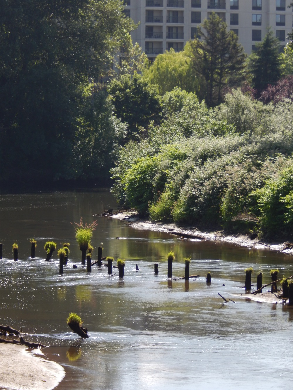 Old Pilings - what did they support?  Old bridge?