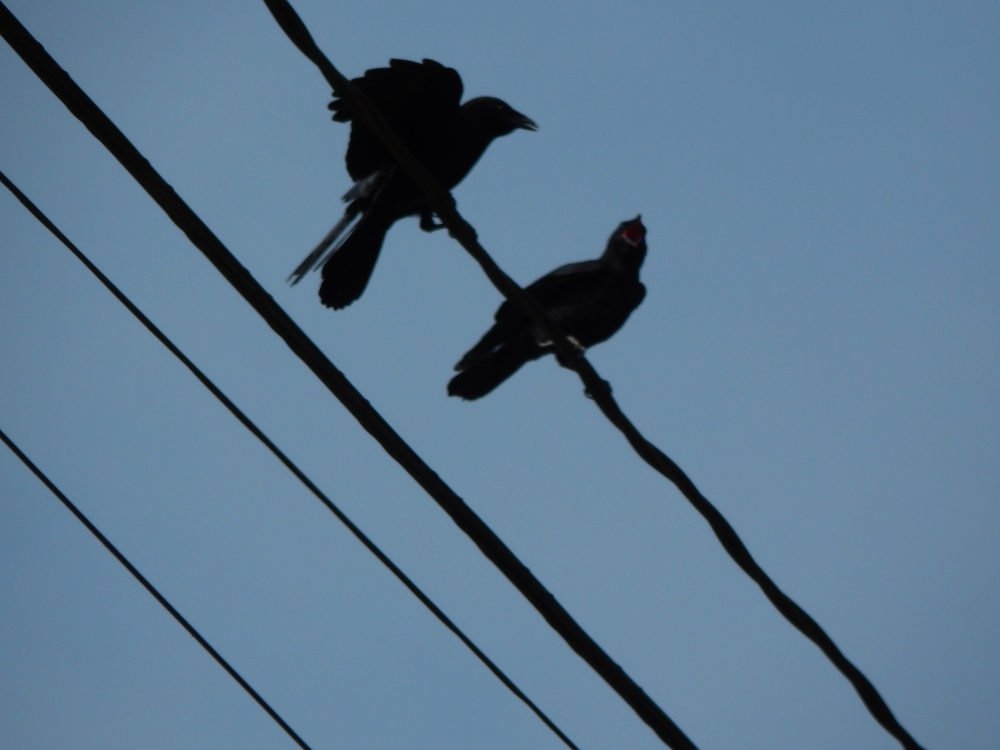 Twin baby crows nagging parents