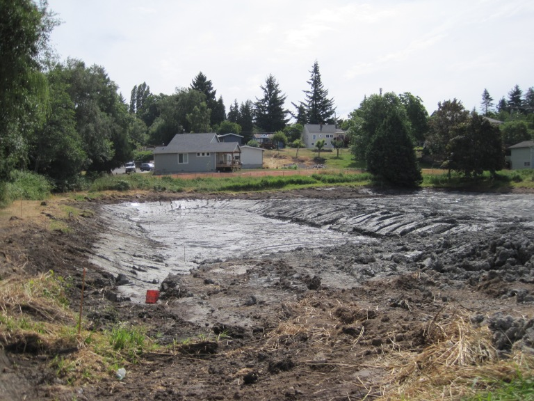 Pond dug up - no more red winged blackbirds
