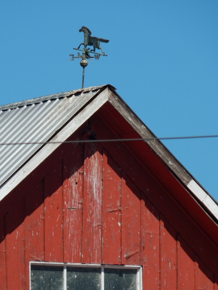 Old Barn with Horse weather vane