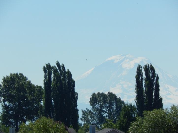 Mt Rainier always there