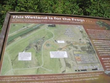 Frog Wetland Highway