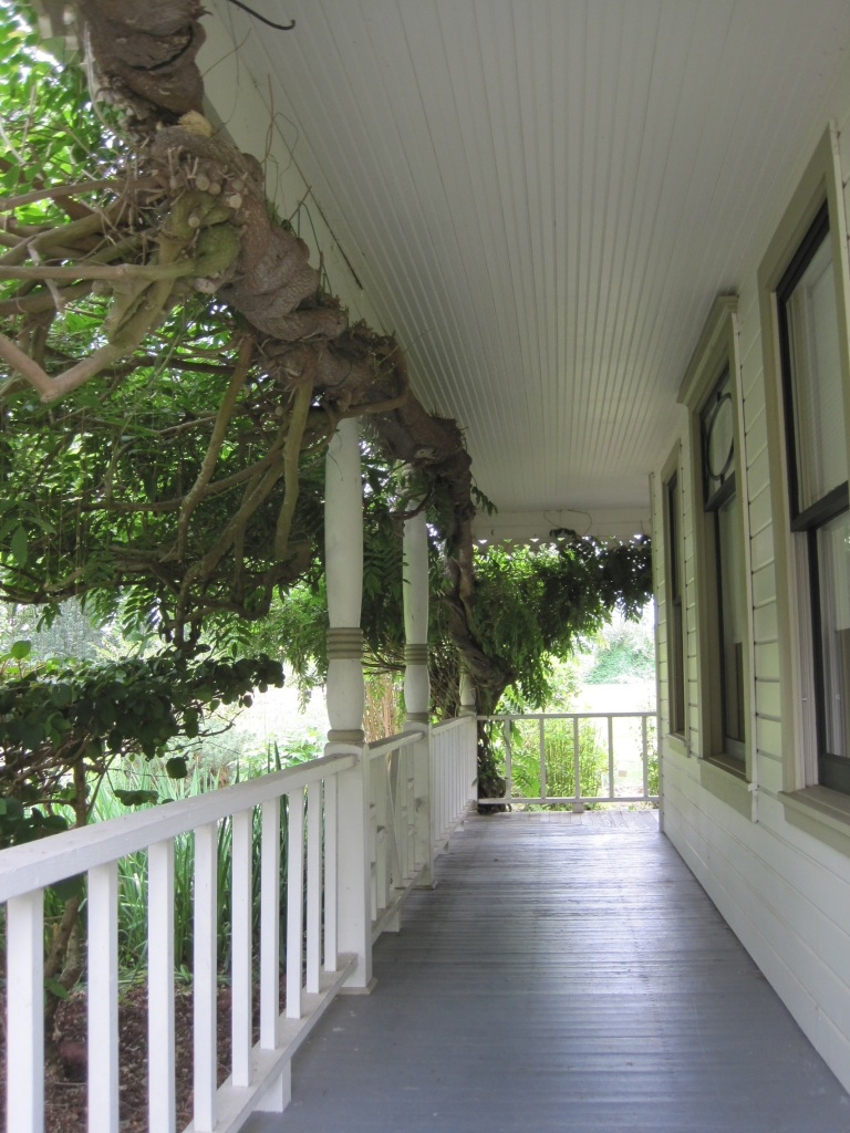 Front Porch with mega wisteria tree