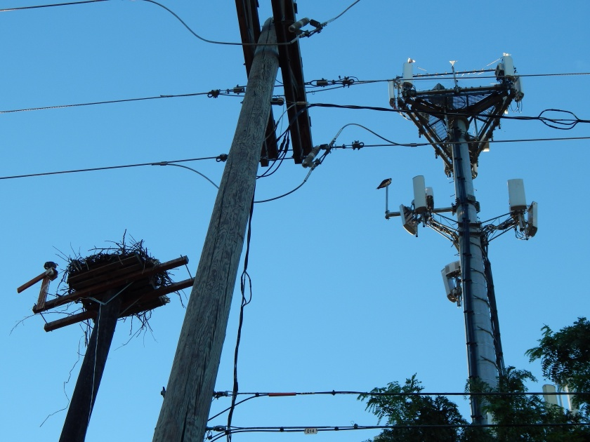 Freeway Osprey world - power lines and cell tower