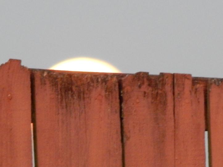 Blue Moon Rising - July in Seattle