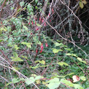 Flowers & brambles - times have changed for this neighborhood