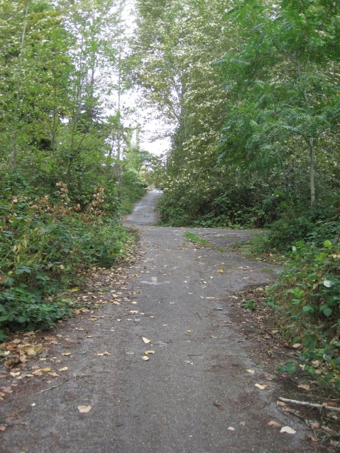 Old roads grown over - mother nature is reclaiming the land