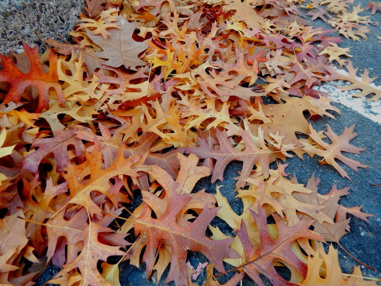 Fall Leaves in a bank parking lot.